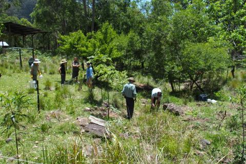 Bushcare group planting trees