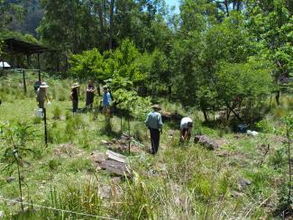 Killarney Bushcare planting day